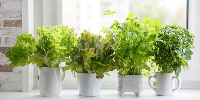 Container Gardening for Seniors