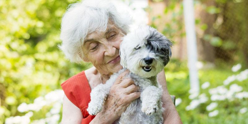 Are Pets a Good Idea for Seniors?